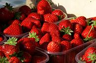 La fraise locale est toujours présente!
